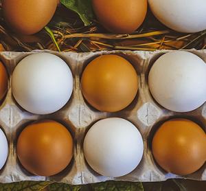 Agilent - egg
