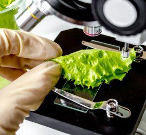 C. botulinum in lettuce