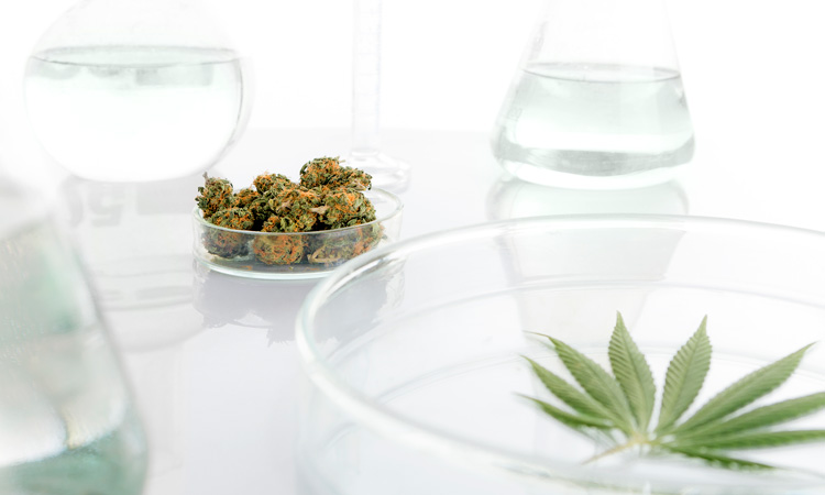 Is CBD and alkaline water the perfect combo?