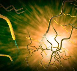 Campylobacteriosis-foodborne