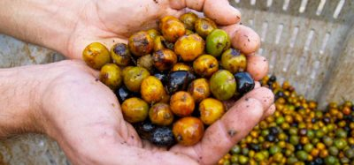 Project looks to up-cycle production waste from saw palmetto berries