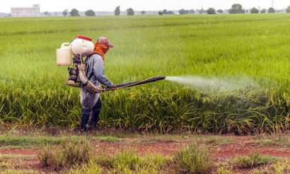 european-research-council-grant-cereal-protection
