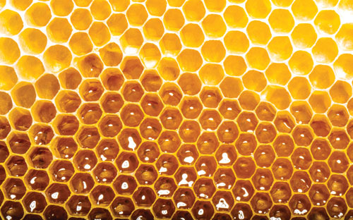 Food fraud: Testing honey with NMR-profiling