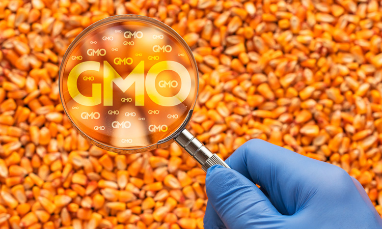 Survey suggests public concerns remain over safety of GM foods