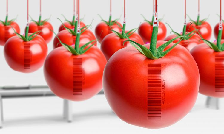 FDA, EPA and USDA launch GMO education initiative