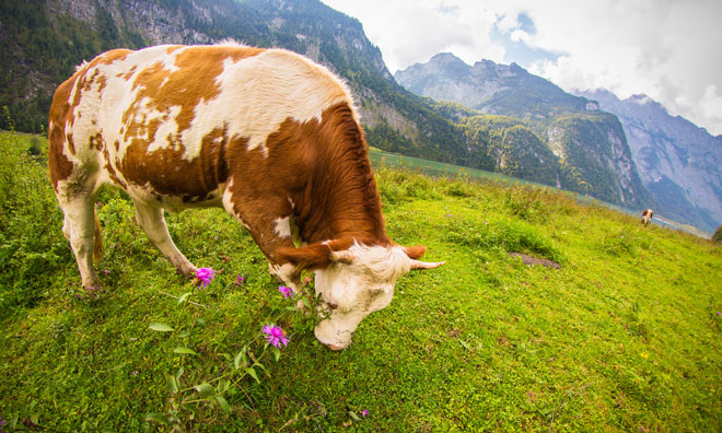 germany-sustainibility-agriculture-ecology
