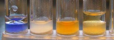 Salmonella - Isolation, Identification, Confirmation