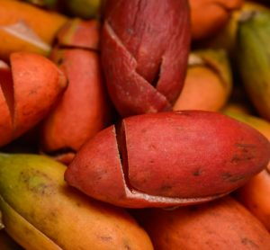Melinjo tree seed extracts may improve obesity and diabetes, study finds