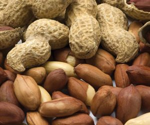 NIR hyperspectral imaging for detection of nut contamination