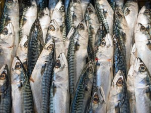 New safety test developed to detect histamine in fish