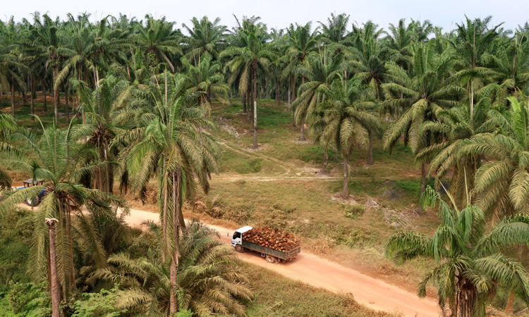 RSPO Trademark now appears on over 400 consumer products