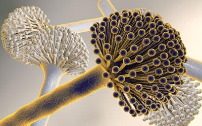 Recent developments in mycotoxin analysis