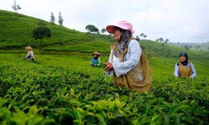 tea-malawi-pickers-oxfam-1