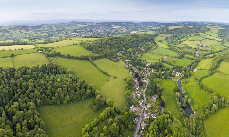 UK agroforestry