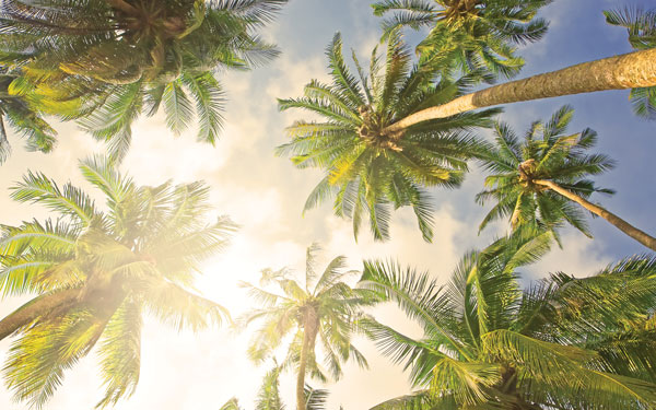 Why the UK's coconut oil industry is heating up