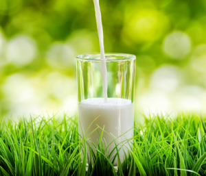 Praise for the white stuff on World Milk Day