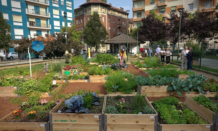 Study says urban land could grow fruit and veg for 15 percent of population