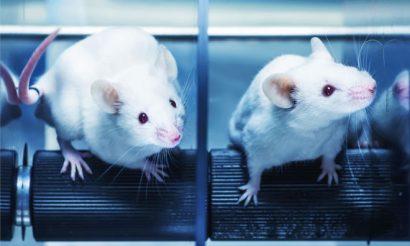 animal-testing-technical-university-denmark