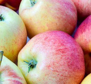 apple-genome