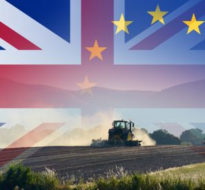 Coalition urges UK government to clarify Brexit trade and food standards