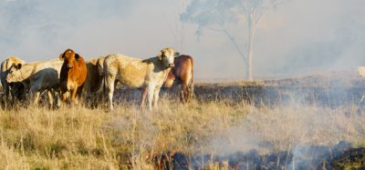 Food safety and shortage concerns rise as Australian bushfires continue