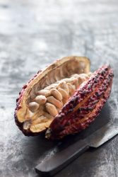 Cacao fruit with seeds inside