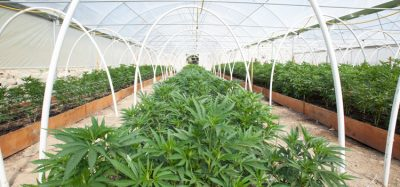 Researchers call for coordinated scientific effort to map cannabis genome