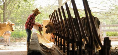 cattle farmer