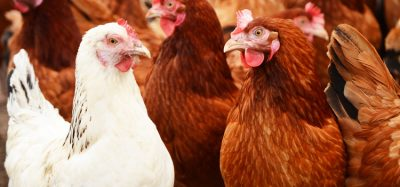 Scottish farmers urged to boost security after bird flu case