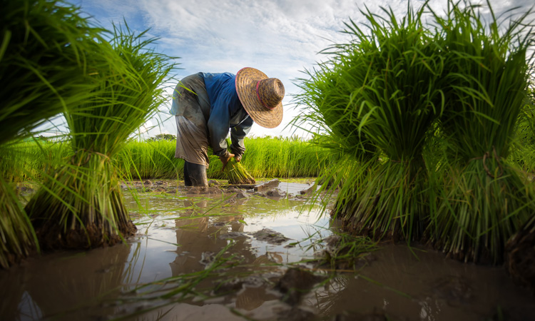 Benefits of climate services for agriculture outweigh costs, says report