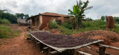 Ivory Coast and Ghana lift threat to cocoa sustainability schemes