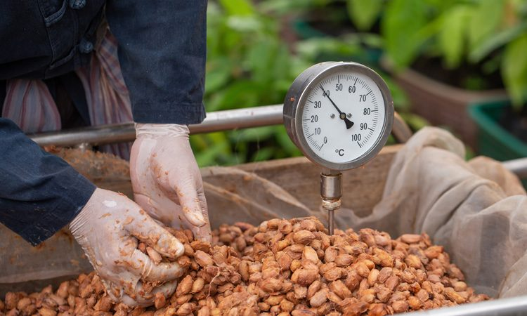 Research shows how changes made at processing stage can alter chocolate flavour