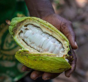 Nestlé reports 'significant progress' in cocoa restoration efforts
