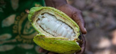 Nestlé reports 'significant progress' in cocoa restoration efforts