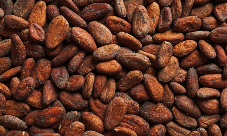 Chocolate flavour is developed during processing of cocoa beans