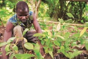cocoa-horizons-foundation