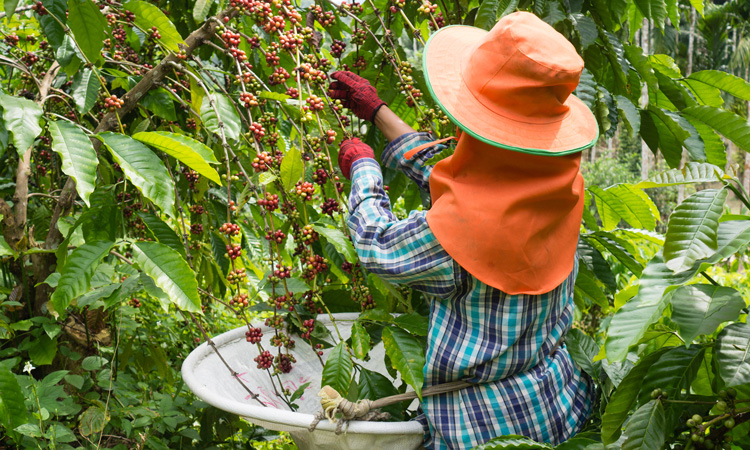 Coffee industry threatened by climate change