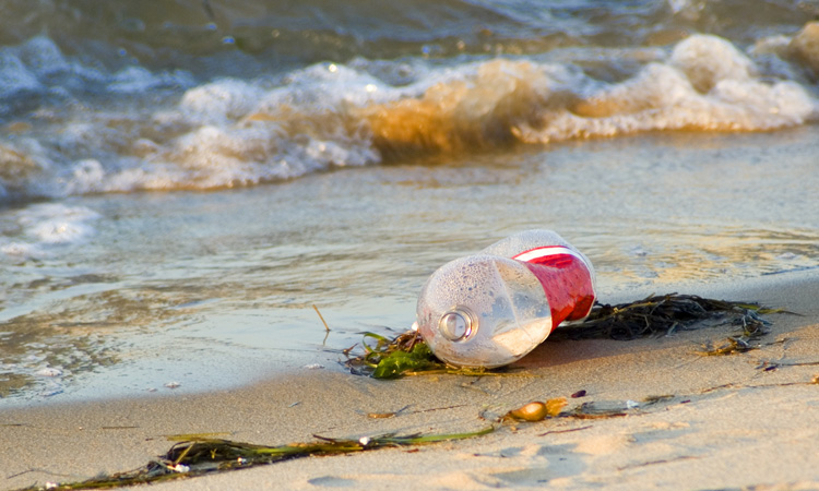 Organisation claims Coca-Cola is misleading about 'single-use' plastic
