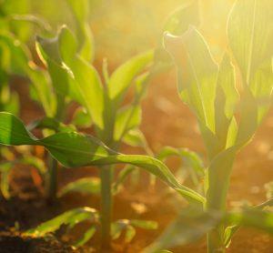 crop-trust-food-security1