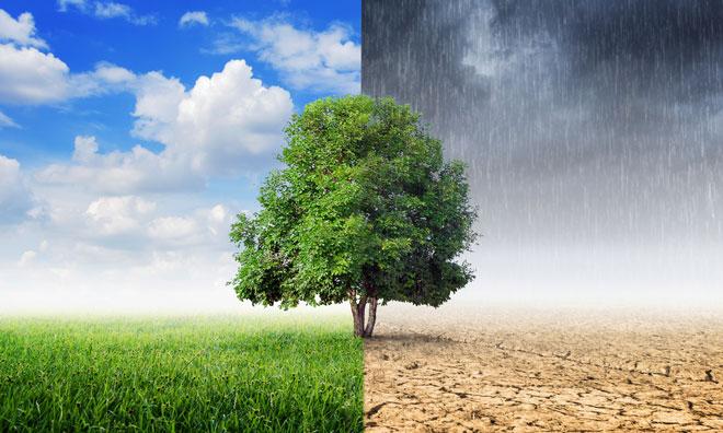 crop-yields-birmingham-agriculture-climate-change