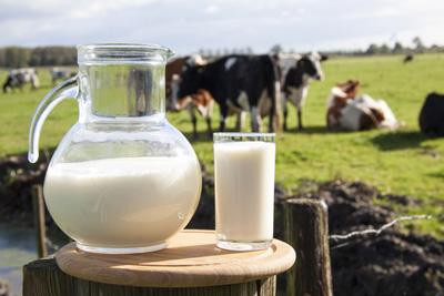 dairy volatility
