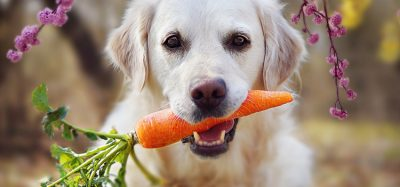 A third of dog owners believe plant-based is better for pets, research finds