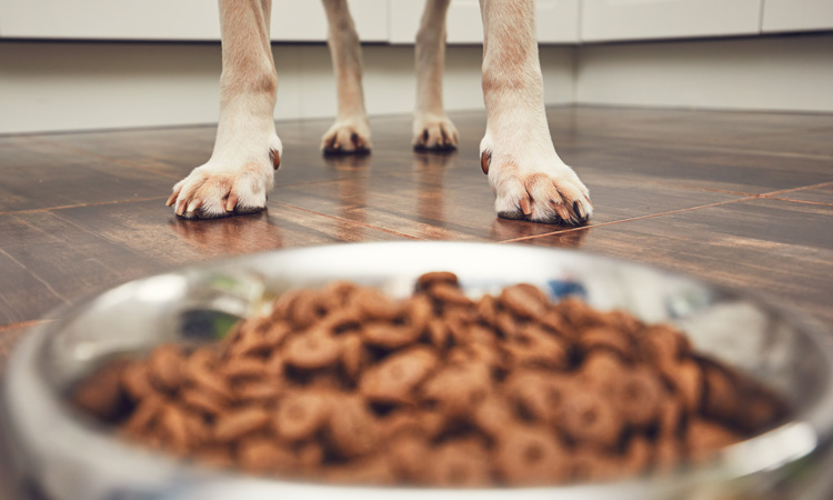 Wood-derived yeast tested in dog food