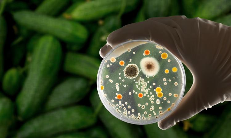 UK research shows societal burden of foodborne pathogens