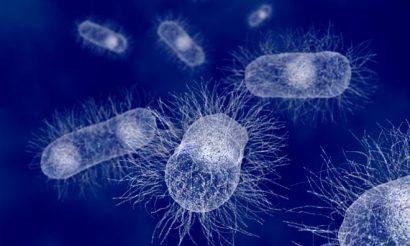ecoli-antibiotics-farming