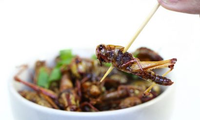 edible-insects-future