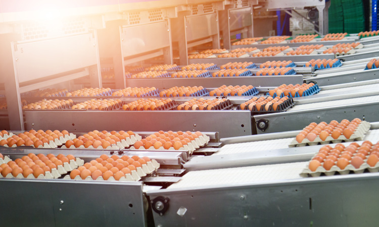 Study suggests egg-industry-funded research downplays danger of cholesterol