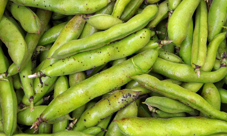 Researchers point to fava beans as favourable non-soy plant protein source