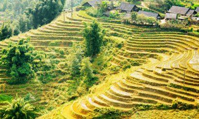 feeding-asia-food-security