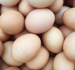 fipronil-eggs